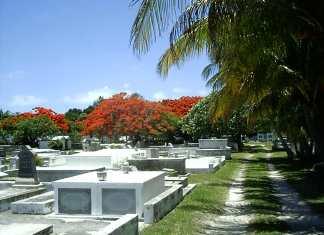 Auto Draft - A palm tree on a street - Key West Cemetery