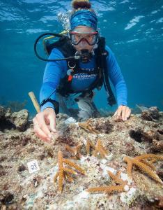 CRF, Mote kick up restoration efforts in 2019 - A person swimming in a body of water - Coral reef