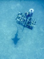 NOAA Launches $97 Million Targeted Mission to Save Florida Reef Tract - Wallpaper