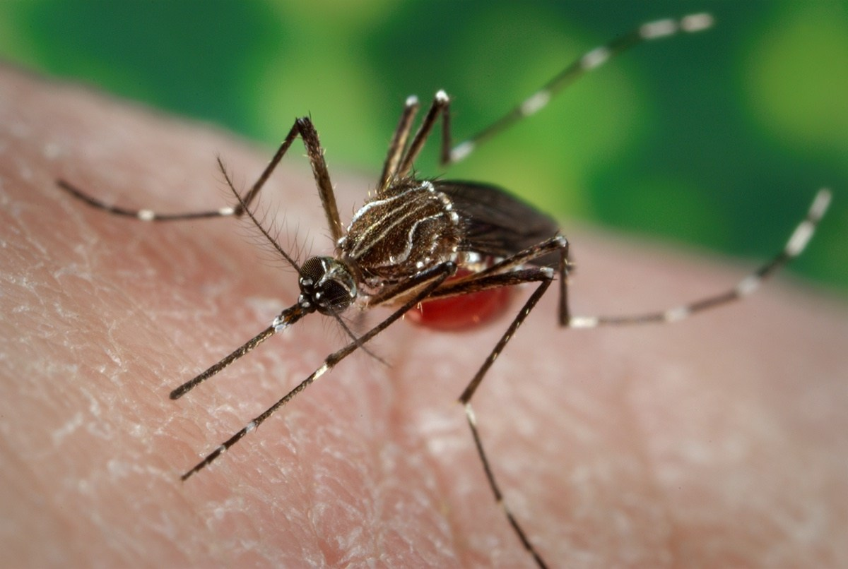 Florida Keys to release modified mosquitoes in plan to fight illness