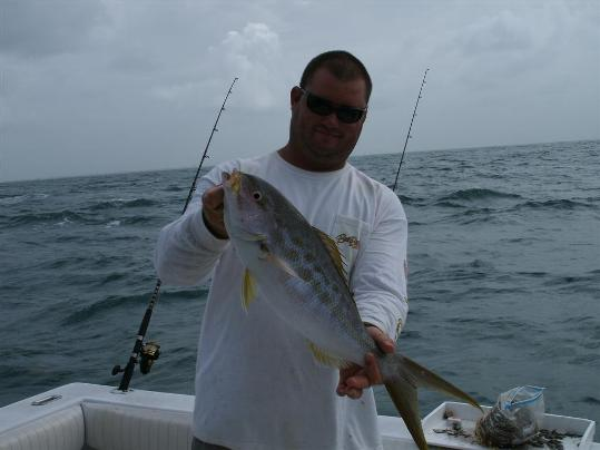 Head to the reef for big yellowtails