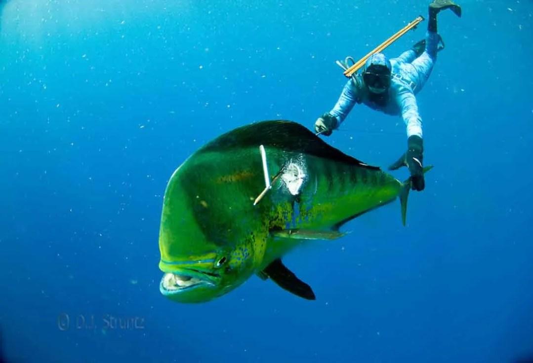 Key West Spear Fishing 1