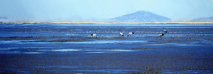 Hábitat de aves invernales en el mar del Oeste