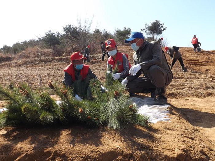 Campaña de la Cruz Roja para transplante de árboles.