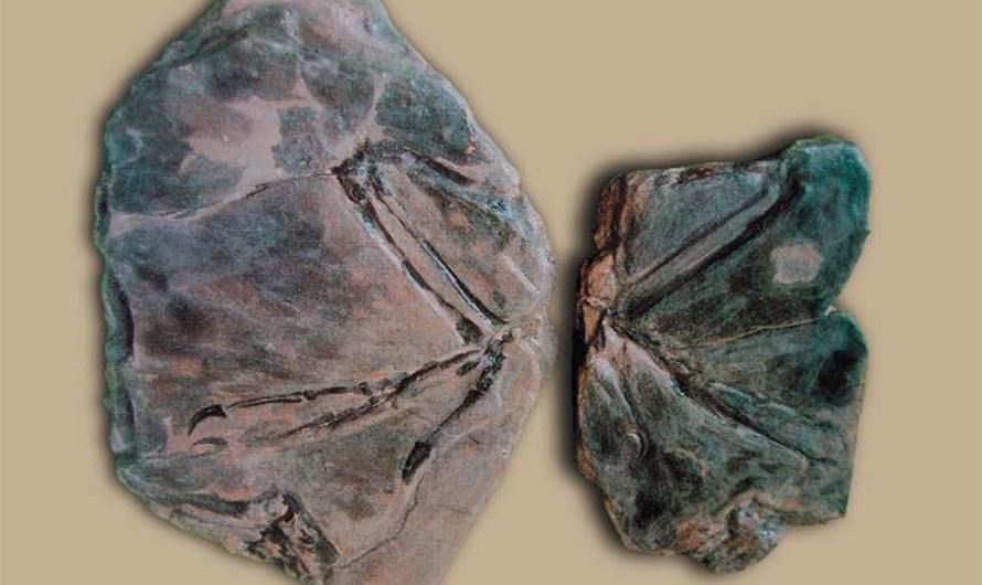 Fósil de Archaeopteryx coreanicus