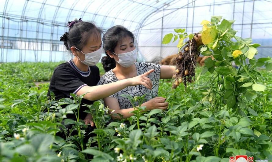 Granja de verduras de Jangchon.