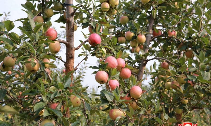 Granja Combinada Frutícola Taedonggang