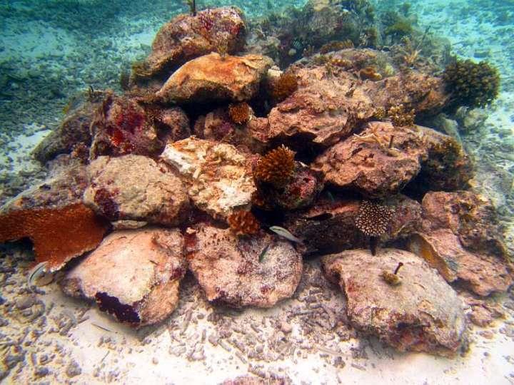CoralDoctors_CoralFarm_StonePile_3