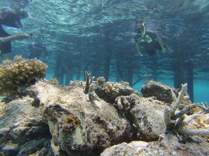 CoralDoctors_CoralFarm_StonePile_5