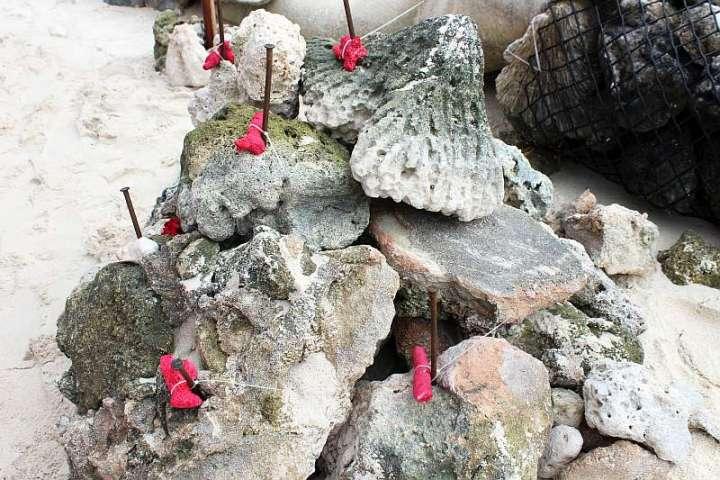 CoralDoctors_GuestEvent_2