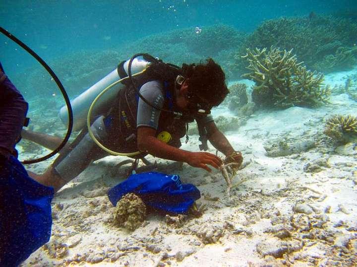CoralDoctors_PracticalLesson_2