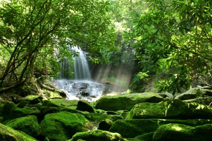 Caribbean_Dominica_Roseau_Botanical_Gardens_and_Emerald_Pool