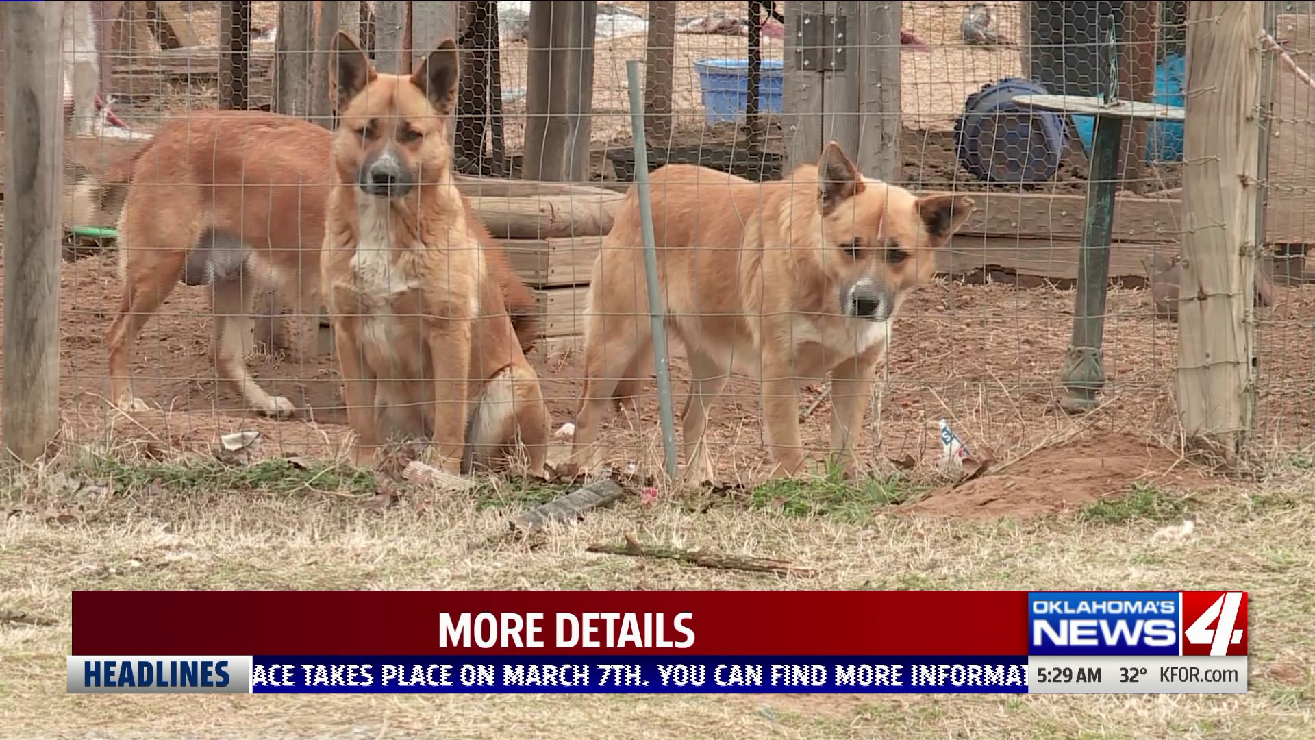 Dogs seen outside Cleveland County home
