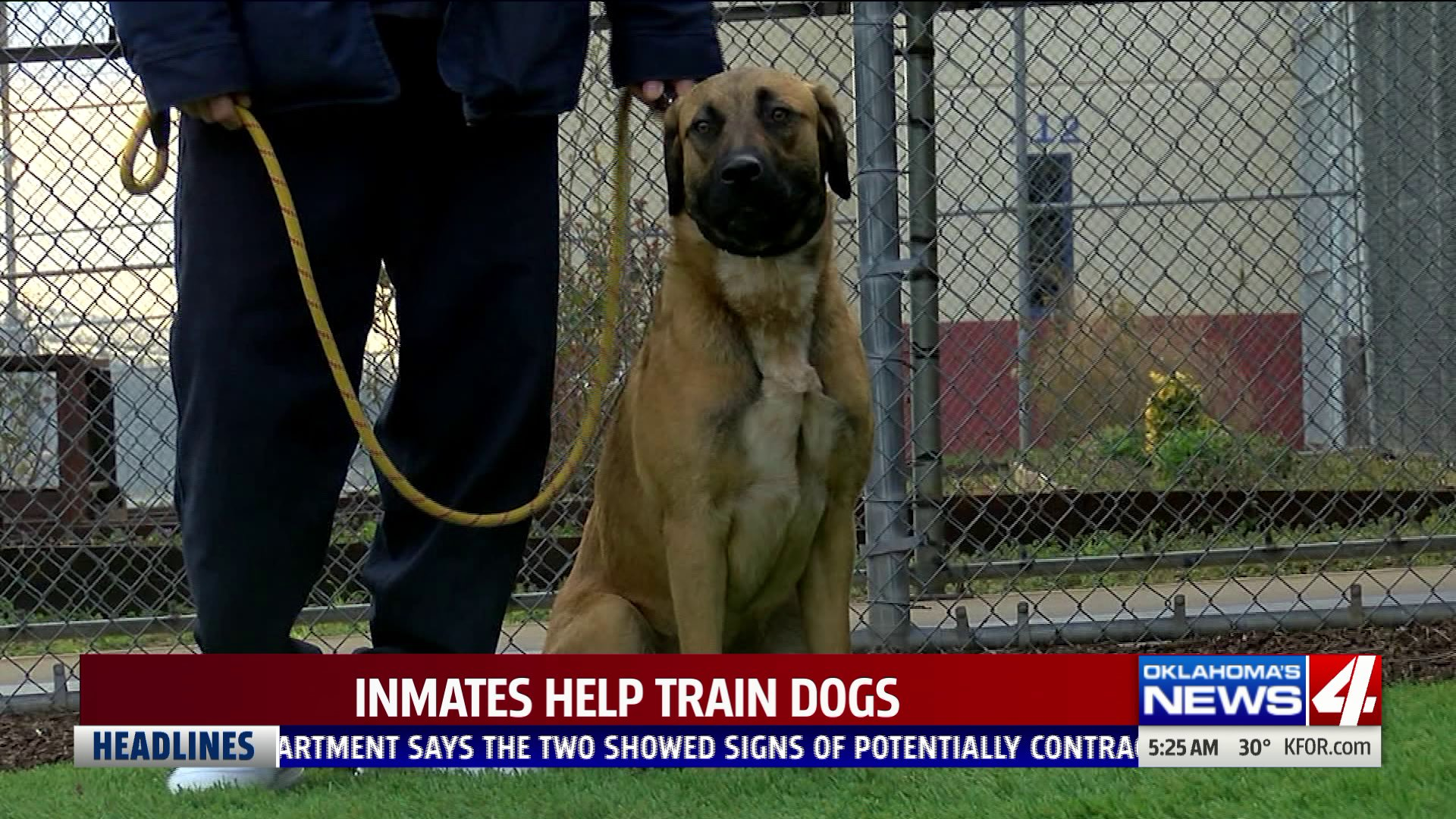 Inmates help train dogs