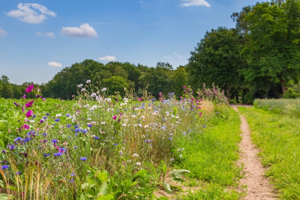 Nature-inclusive,Or,Circular,And,Sustainable,Agriculture,With,Wild,Flowers,Along