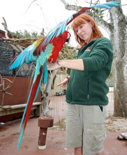 The scarlet macaw carefully pays attention to Scavelli's hand gestures. Each hand gesture signals a certain trick. If completed successfully, the macaw receives a treat.