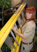 WIth the help of another zoo curator, Scavelli cautiously moves a ladder into the python cage to change out the lights.
