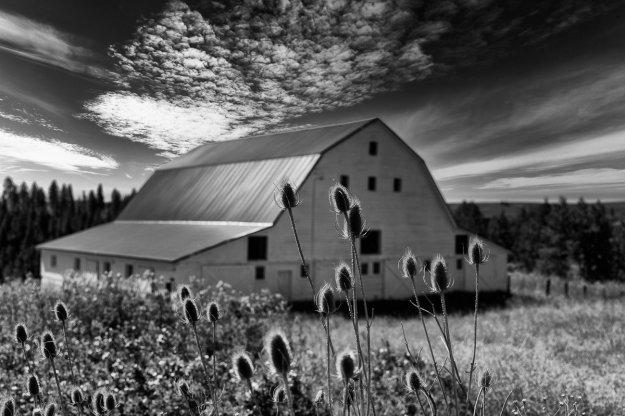 Palouse-White-Barn