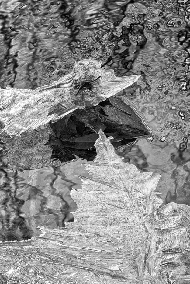 150124_Ice Leaf by .