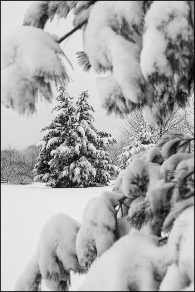 150130_Framed Tree by .