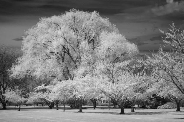 160406_Yakima Arboretum