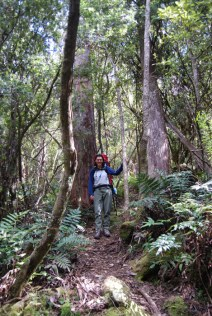 Forest on Mt Fortescue