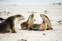 Getting close to sea-lions on Kangaroo Island