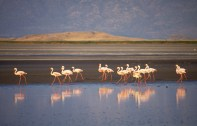 Seeing flamingos in Ngorongoro Crater, Tanzania