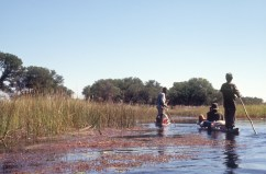 Taking a mokoro into the Okavango Delta