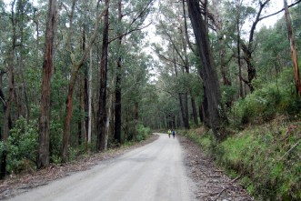 Alternative route back to Erica from the Walhalla-Tyers Road