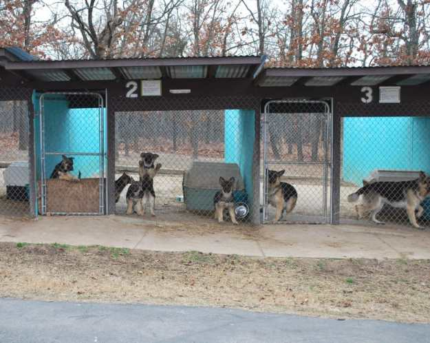 Keystone Kennels in Winter