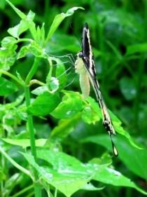 """""""Butterfly in Rain"""""""