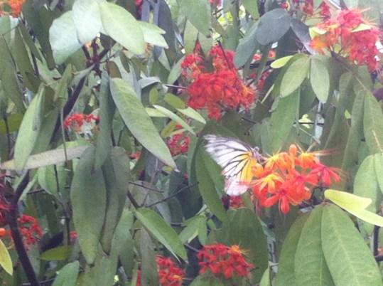 ムユウジュ 蝶と花と