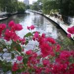 ブーゲンビリアと運河