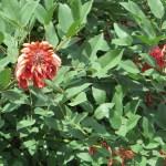 花と葉の姿