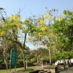 公園のゴールデンシャワー