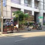 街路に植えられたパパイヤ