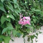 花と蔓の様子