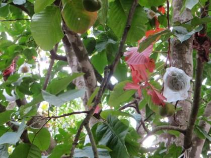 袋かけされている実と木の姿
