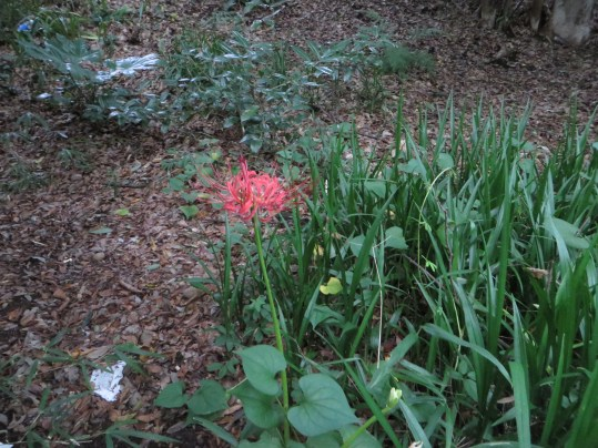 少し若い花