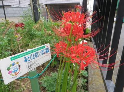 典型的な花の姿