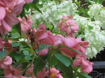 ピンクと白い花の系統
