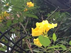下から見た花の姿