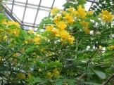 モクセンナ 花を下から見た様子