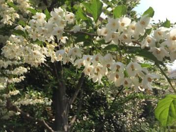 満開の花の姿