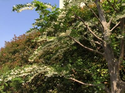 枝の下に咲いている様子