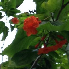 花と葉の様子