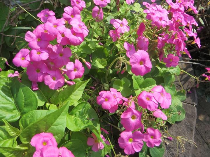 花と植物全体