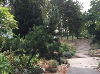 パリの公園の松