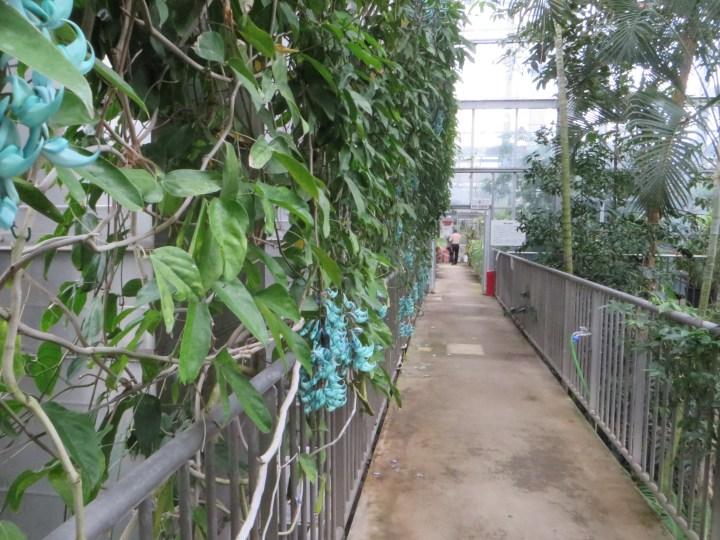 植物の様子